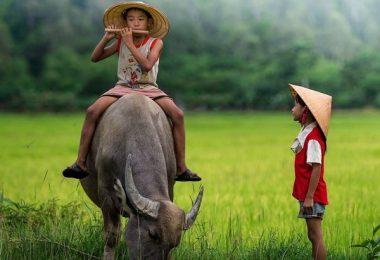 vietnam 8 days